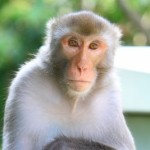 Don't monkey around with organizational change